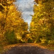Forest path in autumn scenery — Stock Photo #57547549