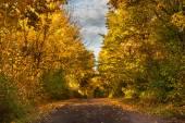 Forest path in autumn scenery — Stockfoto