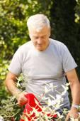 Senior gardener working at garden center. — Stock Photo