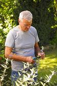 Enior man cutting plants — Stock Photo