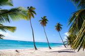 Palm trees on the beach of Isla Saona — Stock Photo