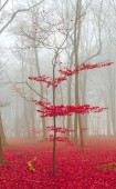Magic forest in red and white — Stock Photo