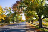 Maldon in Autumn — Stock Photo