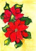 Poinsettia. Hand drawn watercolor painting. — Stock Photo