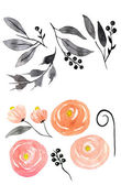 Peonies. Hand drawn watercolor painting on white background. — Stock Photo