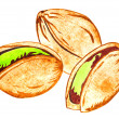Pistachio nuts isolated on white — Stock Vector #67307569