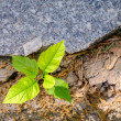 New sprout, concept of business break through, top view — Stock Photo #71894357