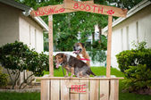 A beagle and a boxer dog sitting in a kissing booth — Stock Photo