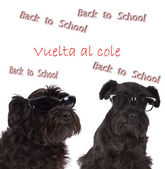 Dogs with signs of back to school — Photo