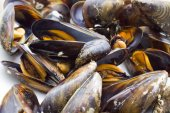 İzole lezzetli midye — Stok fotoğraf