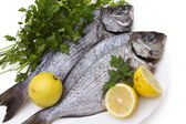 Bream isolated — Stock Photo