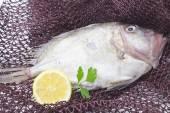 Fresh fish isolated — Stock Photo