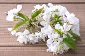 Cherry blossom branch on wooden background — Stock Photo