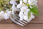 Ветвь вишни с вилкой — Стоковое фото