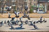 Pigeons on the area 859. — Stock Photo