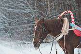 Horse in the winter in the wood 1478. — Stock Photo