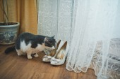Cat and wedding shoes 1723. — Stock Photo
