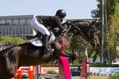 Horse jumping - Caitlin Ziegler — Stock Photo