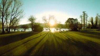 Park trees nature. — Stock Video