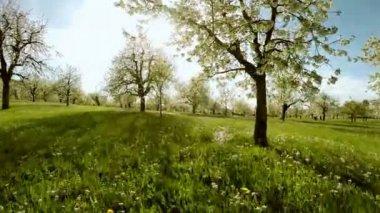 Beautiful fauna and flora — Stock Video