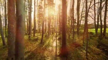 Magical sun rays — Stock Video