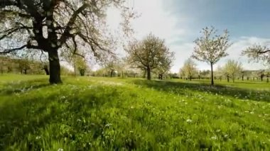 Trees in springtime. — Stock Video