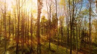 Raios de sol mágico — Vídeo stock