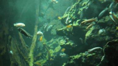 Fish in aquarium. — Stock Video
