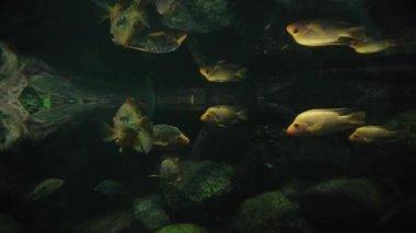 Fish sea life. — Stock Video