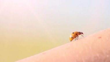 Ladybird macro — Stock Video