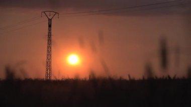 Corn field at sunset. — Stock Video