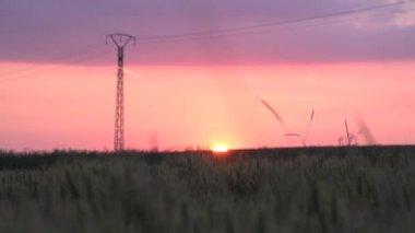 Beautiful sunset — Stock Video