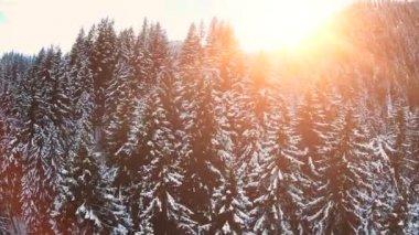 Snow winter trees. — Stock Video