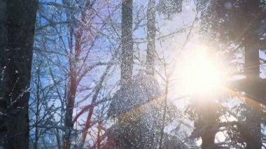 Sun Behind Snow Trees. — Stock Video
