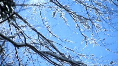 Sneeuw vallen — Stockvideo