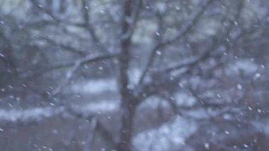 Snow Winter Background — Stock Video