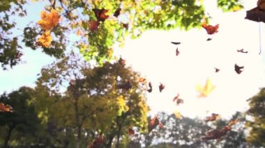 Autumn leaves falling — Stock Video