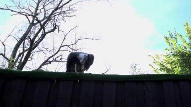 Eagle bird taking off — Stock Video