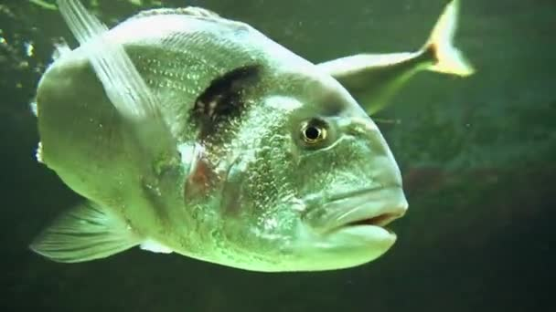 Fishes swimming in ocean — Vídeo de stock