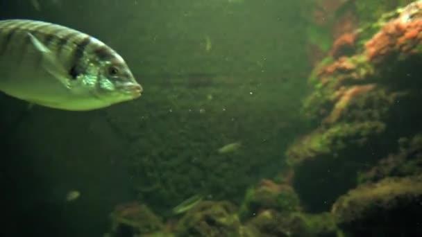 Fishes swimming in ocean — Vídeo de stock
