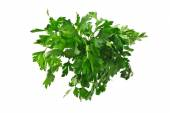 Bunch of parsley — Stock Photo