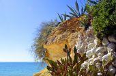 Cactus garden on Armacao De Pera Beach, Portugal — Stock Photo