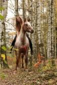 Jolie jeune fille chevauchant un cheval sans aucun équipement en automne — Photo