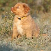 Beautiful puppy sitting in soft rime — Stock Photo