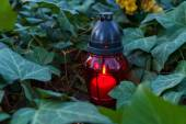 """""""All Souls' Day"""" or """"Day of the dead"""" candle between ivy plant — Stock Photo"""