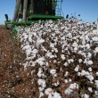 Cotton harvest — Stock Photo #67002747