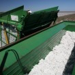 Cotton harvest — Stock Photo #67002943