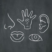 Chalk Five Senses — Stock Photo