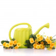 Watering can — Stock Photo #52751459