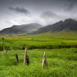Beautiful landscape of Icelandic field — Stock Photo #55519457